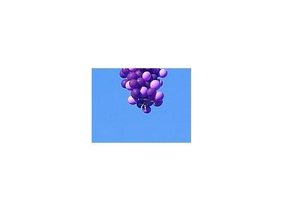 Photo Small Balloons 4 Vehicle