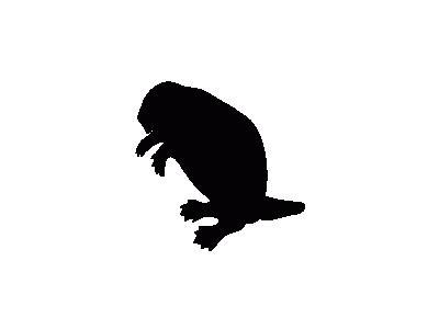 Contour Beaver Animal