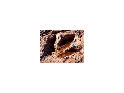 Photo Small Dinosaur Tracks Other