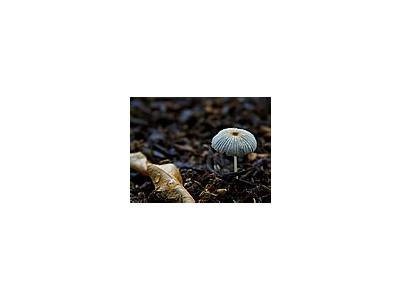 Photo Small Mushroom Other