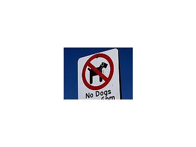 Photo Small No Dogs Allowed Other