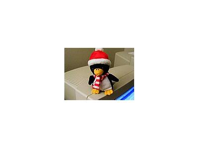 Photo Small Penguin Other