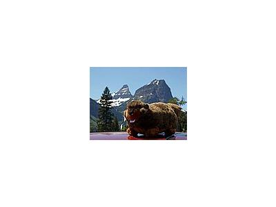 Photo Small Plush Marmot Other