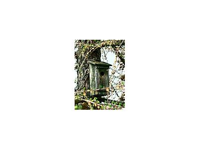 Photo Small Old Wooden Nesting Box Other