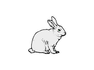 Coniglio Architetto Fran 01 Animal