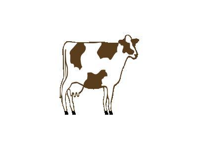 Vacca Pezzata Rossa Val 01 Animal