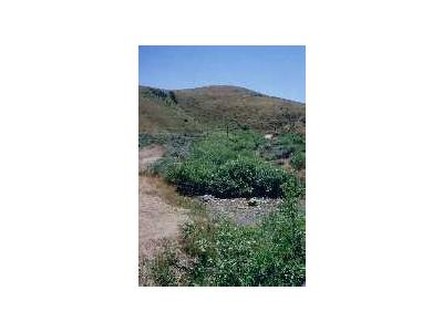 WO3679 Willow Riparian Habitat In Idaho 00082 Photo Small Wildlife