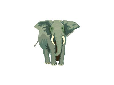 Elefante01 Architetto Fr 01 Animal