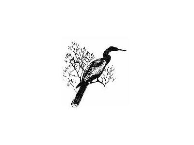 Anhinga 00093 Photo Small Wildlife