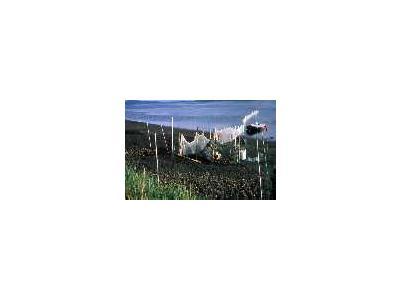 Bird Banding At Izembek Lagoon 00114 Photo Small Wildlife