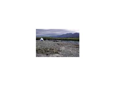 Camp On Sheenjek River 00183 Photo Small Wildlife