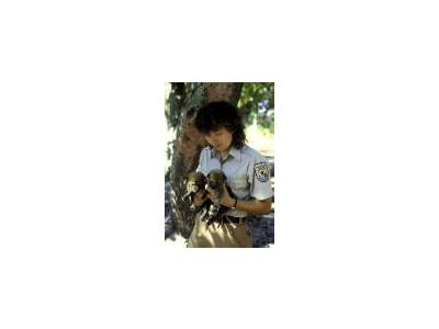 FWS Employee Holds Endangered Red Wolf Pups 00192 Photo Small Wildlife
