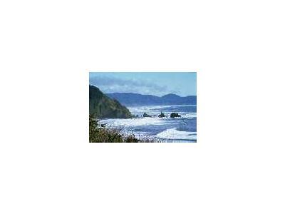 WO4854 Oregon Coast 00197 Photo Small Wildlife