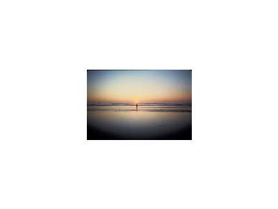 Sunset On Beach 00218 Photo Small Wildlife