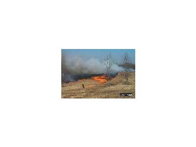 Field Burning At Occoquan Bay National Wildlife Refuge 00334 Photo Small Wildlife