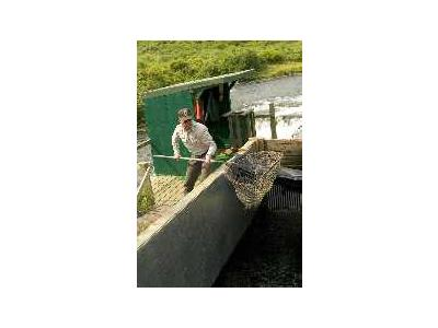 FWS Staff Monitoring Frazer Fish Pass 00348 Photo Small Wildlife