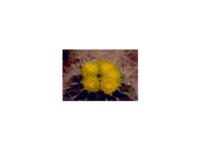 Barrel Cactus 00370 Photo Small Wildlife