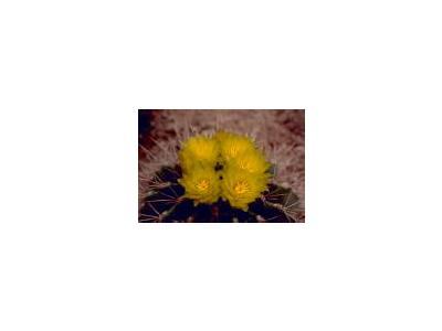 Barrel Cactus 00370 Photo Small Wildlife