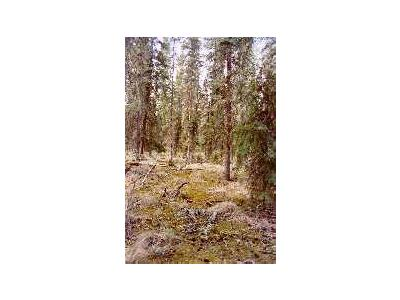 Boreal Forest Floor 00407 Photo Small Wildlife