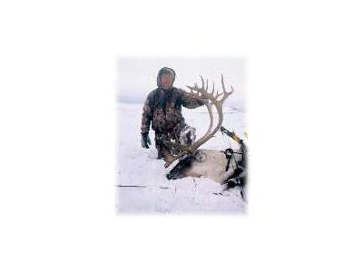 Bow Hunting Caribou 00421 Photo Small Wildlife