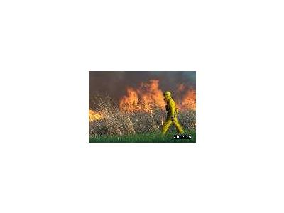 Grassland Burning At Bombay Hook National Wildlife Refuge 00436 Photo Small Wildlife