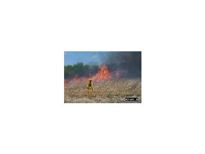 Grassland Burning At Bombay Hook National Wildlife Refuge 00439 Photo Small Wildlife
