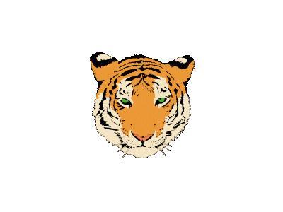 Tiger Graig Ryan Smith   01 Animal