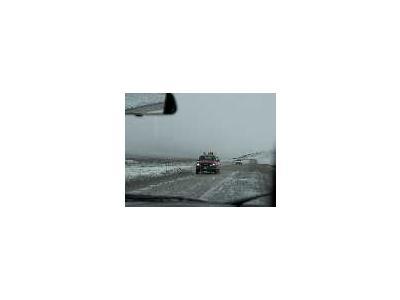 Dalton Highway August Snow Storm 00473 Photo Small Wildlife