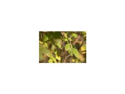 Dragonfly 00491 Photo Small Wildlife