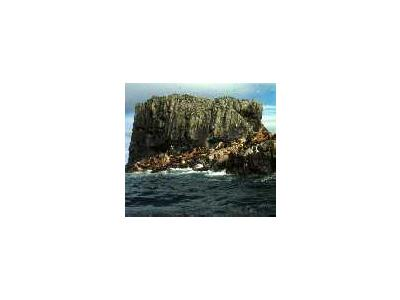 Aiugunak Pinnacles Alaska Peninsula Unit1980 00546 Photo Small Wildlife