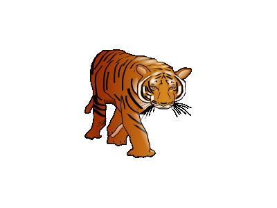 Color Tiger Susan Park 01 Animal