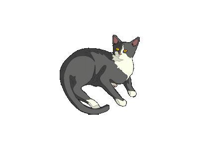 Gatto Cat Architetto Fra 03 Animal