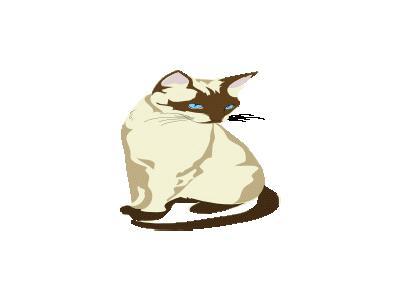 Gatto Cat Architetto Fra 04 Animal