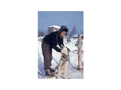 Local Resident With Sled Dog 00689 Photo Small Wildlife