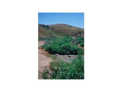 WO3679 Willow Riparian Habitat In Idaho 00764 Photo Small Wildlife