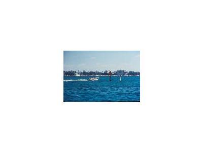 Boat Speeding Thru Manatee Idle Zone 00805 Photo Small Wildlife