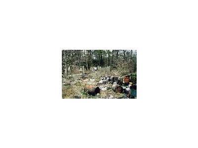 Contaminant Area 00820 Photo Small Wildlife