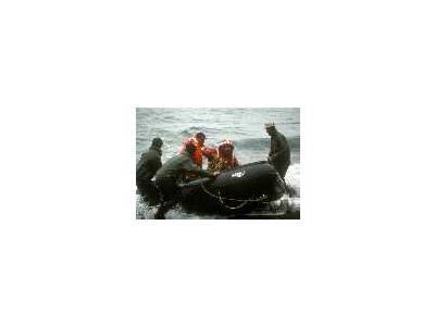 Aleutian Cacklling Goose Capture And Translocation1978 1991 Album 00846 Photo Small Wildlife