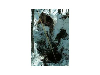 Biologist Tranquilizes A Denning Black Bear 00875 Photo Small Wildlife