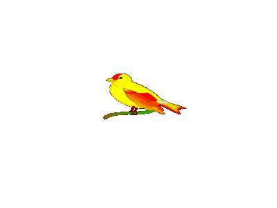 Bird Of Peace Mauro Oliv 01 Animal