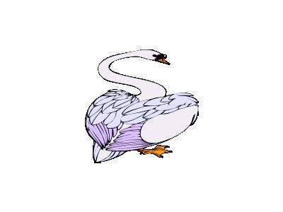 Cigno Di Spalle Architet 01 Animal