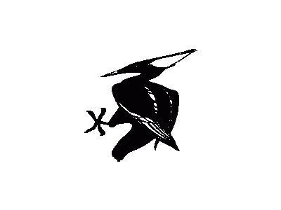 Uccello Bianco E Nero Ar 01 Animal