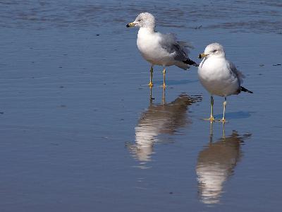 Photo Big Seagulls And Beach Animal
