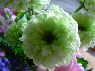 Photo Big White And Green Flower Flower