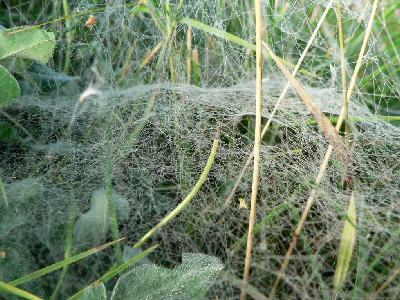 Photo Big Deep Covered Spider Web Insect