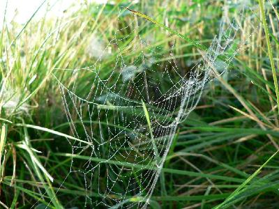 Photo Big Dew Covered Spider Web 4 Insect