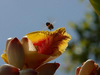 Photo Big Flower Bee Insect
