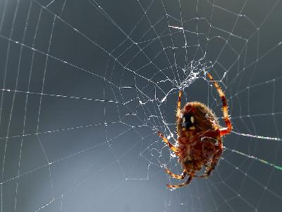 Photo Big Spider Web Insect