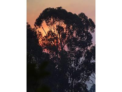 Photo Big Sunrise Tree Landscape