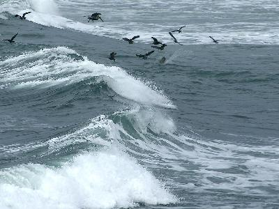 Photo Big Ocean Birds Ocean